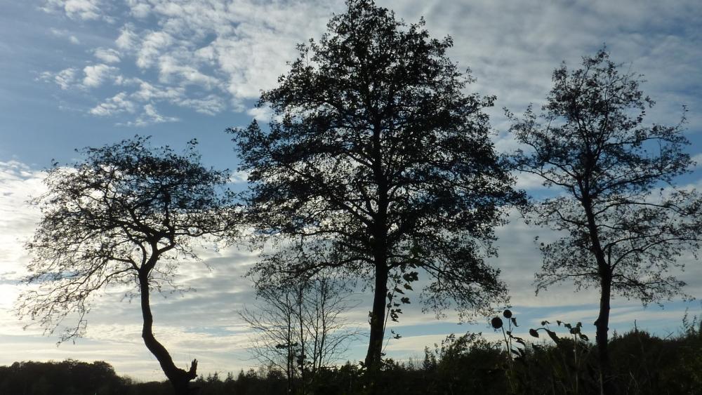 Silhouet van bomen